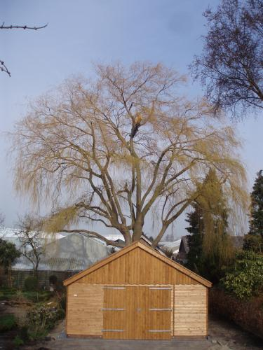 boom op auto gemeente aansprakelijk